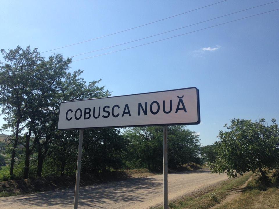 Cobusca Noua1